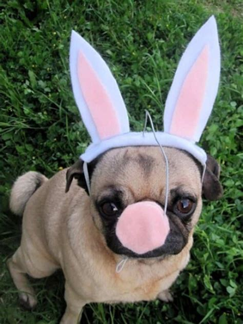 adorable dogs  cats  easter costumes