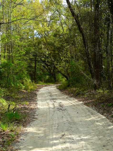 Filea Country Road In Jefferson County, Floridajpg