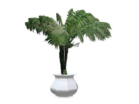 Tageslicht In Dunkle Räume Bringen by Pflanzen Fur Dunkle Ecken