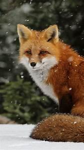 Quick Brown Fox  Fox