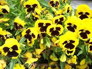 Bilder Blumen Kostenlos Downloaden : blumenbilder kostenlos gratis blumen fotos ~ Frokenaadalensverden.com Haus und Dekorationen