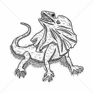 Frilled lizard Vector Image - 1949547 | StockUnlimited