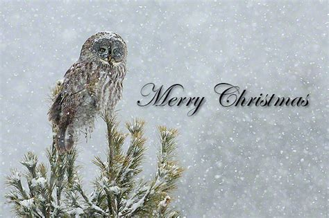 thank you merry christmas nature blog nature blog