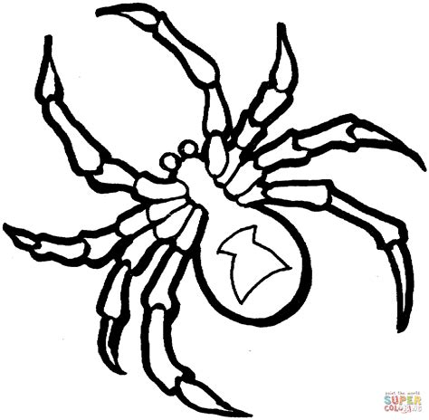 spider coloring pages    print