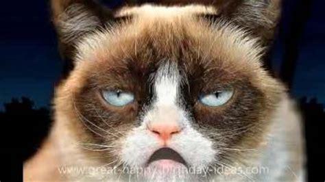 grumpy cat happy birthday song  funny birthday wishes ecards