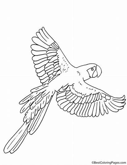 Coloring Macaw Sheets