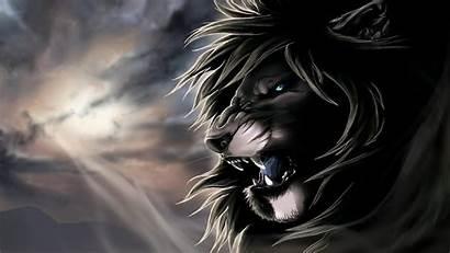 Lion 4k Animals