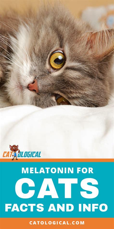 Melatonin chip for cats