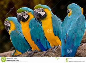 Yellow parrot macaw stock image. Image of animals ...