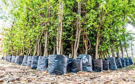 India Sets A New World Record For Planting The Most Trees