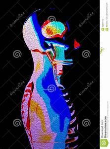 Human Body Diagram Bowel
