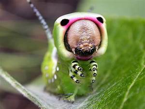 Confessions Of A Lepidoterist  Caterpillar Couture