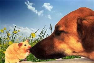 Mietwohnung Mit Hund : hinweise zur anschaffung ~ Lizthompson.info Haus und Dekorationen