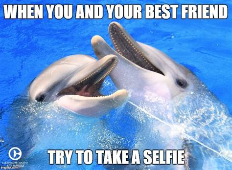 Dolphins Memes - 40 best winter hope dolphins images on pinterest dolphin tale dolphins and clearwater