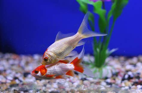 aquarium bureau tlcharger fond d 39 ecran aquarium poisson plantes fonds d