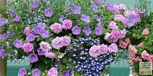 Fleur D Hiver Pour Jardinière : 5 compositions pour une jardini re fleurie l 39 t prochain ~ Dailycaller-alerts.com Idées de Décoration