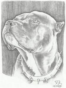 Brindle pitbull by ZEBO420 on DeviantArt