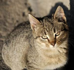 Signs  U0026 Symptoms Of Kidney Infection In Cats