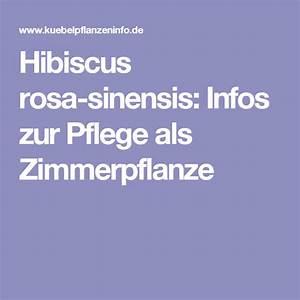 Hibiskus Pflege Zimmerpflanze : hibiscus rosa sinensis infos zur pflege als zimmerpflanze zimmerpflanzen hibiskus und pflanzen ~ A.2002-acura-tl-radio.info Haus und Dekorationen