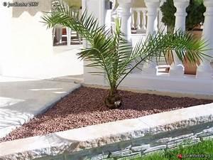 Palmier De Jardin : palmier phoenix mon p 39 tit jardin et ses occupants les ~ Nature-et-papiers.com Idées de Décoration
