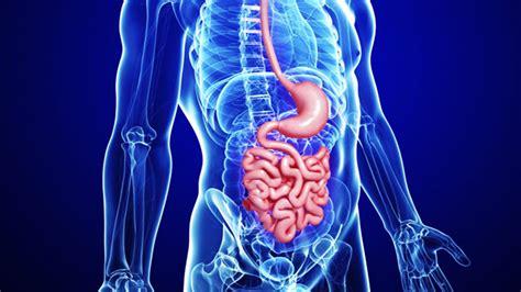 gastroenterology gastrointestinal surgery euracare
