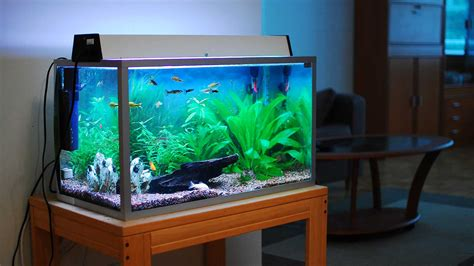 the best home aquariums of 2017 come into the water