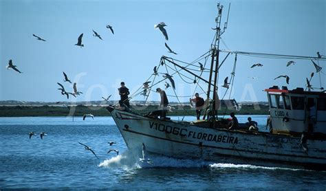 Fishing Boats For Sale Portugal by Portuguese Fishing Boat Olhao Portugal