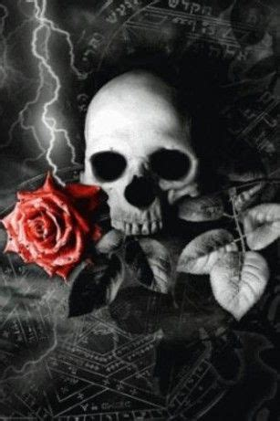 skulls rose  wallpaper  android skulls pinterest  tumblr desktop wallpapers  skulls