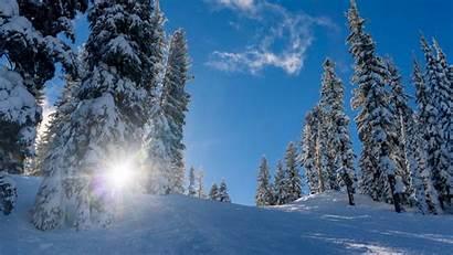 Snow Forest Winter Trees Sunlight 4k Windows