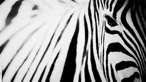 Zebra Bild Ikea by Silvya Design Process Page 2