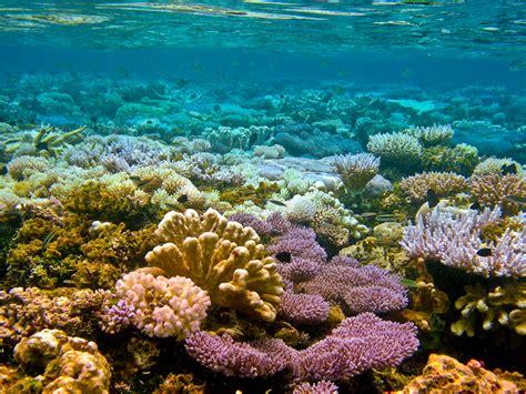 Animated Wallpaper Exles - atolls reefs