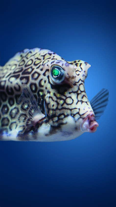 ocean atlantic pacific indian underwater fish boxfish animals water diving oceans cowfish food 1230 tourism meet sea wallpapershome
