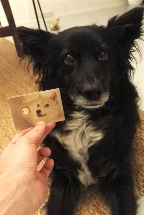 We finally bought our first Dogecoins today : dogecoin