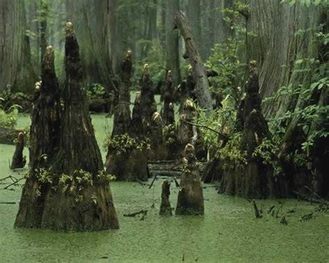 Garden State Lumber by Swamps Wildlife Journal Junior