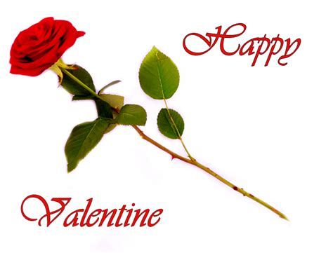 Happy Valentine's Day Rose Clip Art