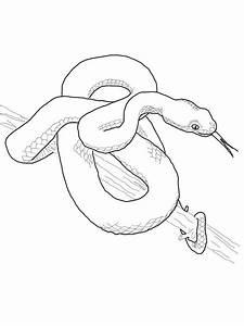 Dibujo De Anaconda Para Colorear Dibujo De Anaconda Y
