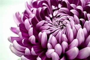 Mother's Day Stock Ideas - Tesselaar Flowers
