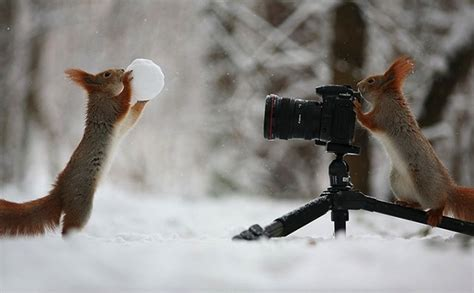 animal photographers      world