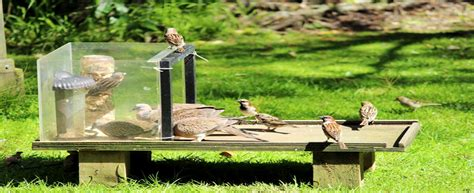 affordable home gardeners birds and bird feeders