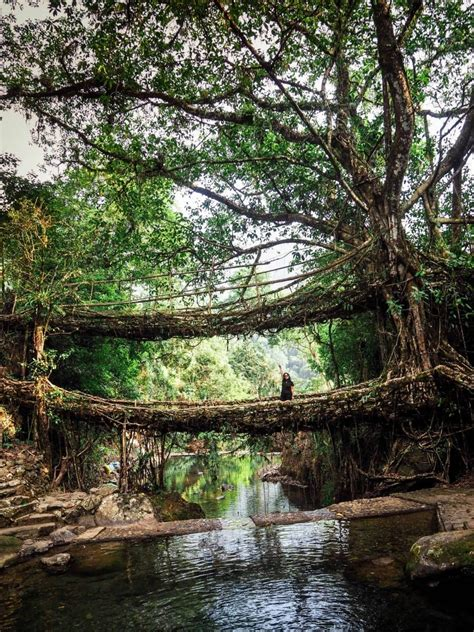 Double Decker Root Bridge An Important Step By Step