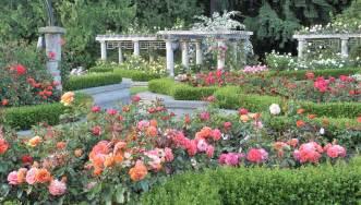 paper roses 夏天风景图片