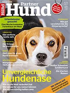 Partner Hund Abo Kündigen : katze bettelt am tisch geliebte katze magazin ~ Lizthompson.info Haus und Dekorationen
