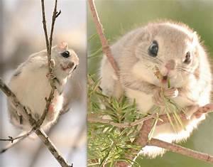 2 of the Most Kawaii Japanese Animals! | Japan Info