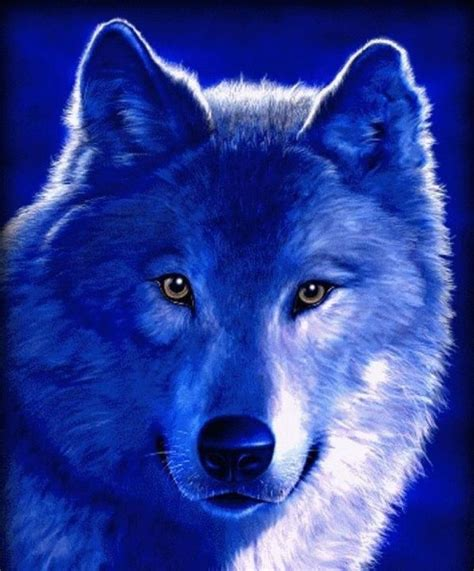 Blue Cool Wolf Wallpaper by Blue Wolf American Wolves And Blue