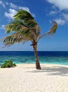 Bilder Am Strand : was die str nde auf den malediven so unwiderstehlich macht inselnauten malediven backpacker ~ Watch28wear.com Haus und Dekorationen