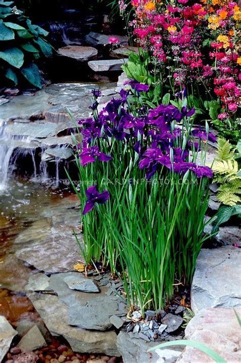 water garden plants 89 best ideas about pond plants on gardens