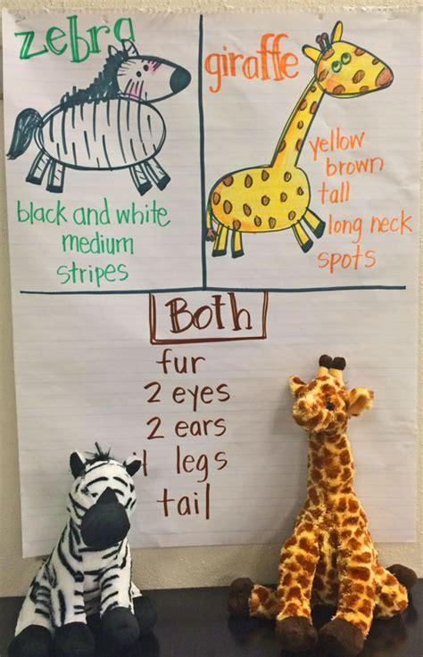 zoo   room kindergarten kindergarten