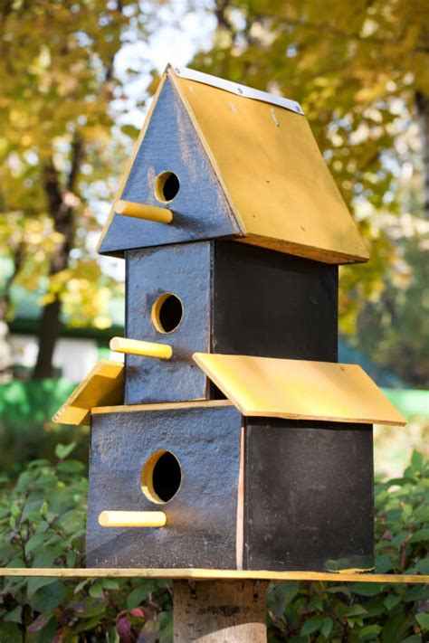 78 decorative painted outdoor wooden bird houses photos
