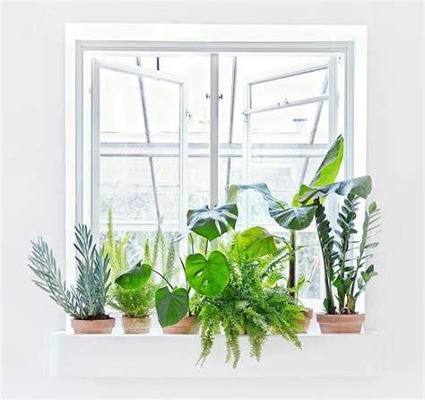 plantes dépolluantes chambre à coucher plante dépolluante offrez un bol d 39 air à votre intérieur