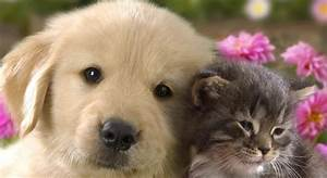 Dog And Cat Together Cute Posted By Shea Vermillion At ...